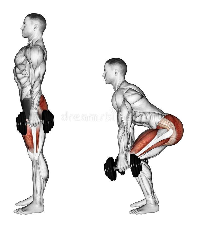 s'exercer Postures accroupies avec des haltères illustration libre de droits
