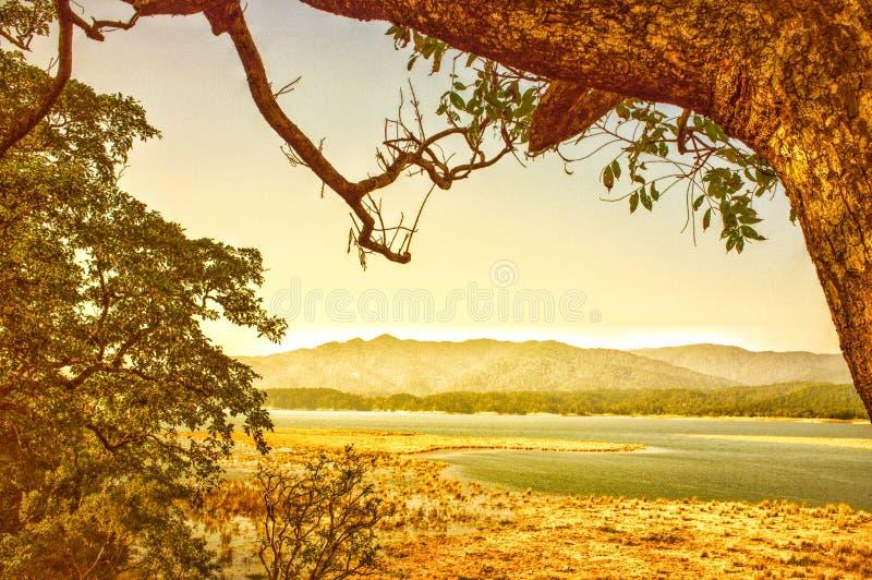 ` S för gul gräsplan & Sambhar på land royaltyfria bilder
