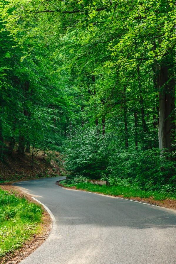 S-formad asfaltväg royaltyfri fotografi