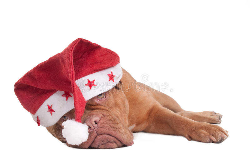 It's gonna be a lovely Christmas stock images