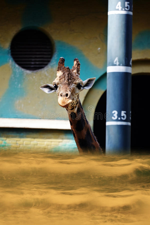 It`s high time, globle warming up. Flooded zoo, giraffe looking out for help
