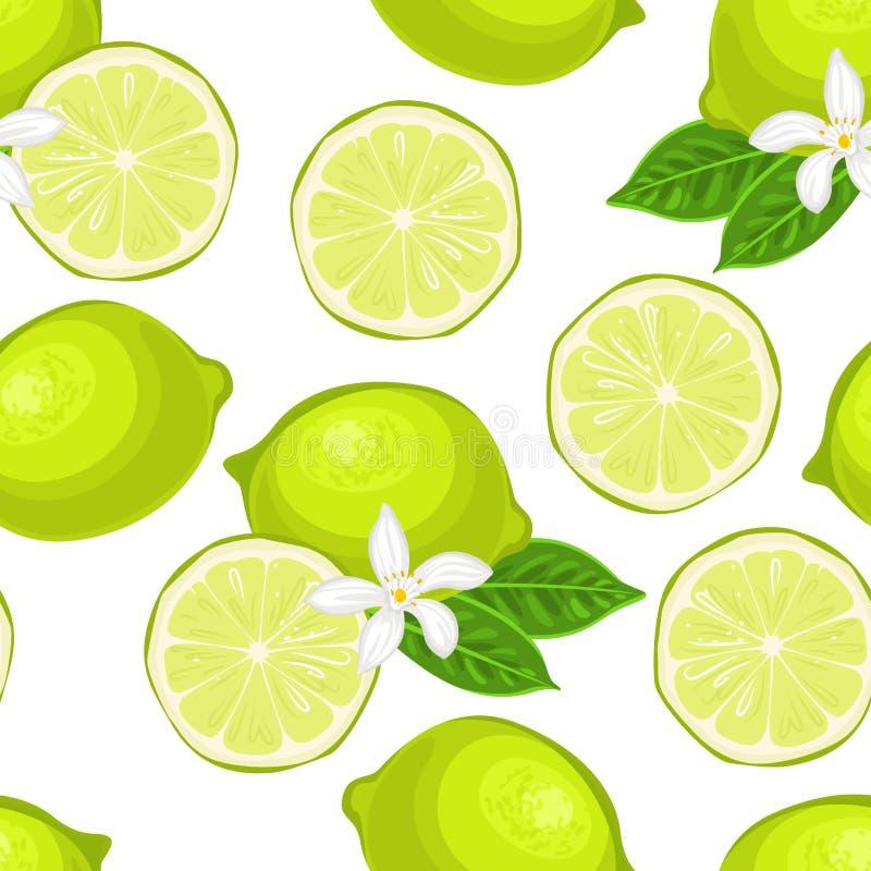 S?ml?s modell f?r limefrukt Vektorillustration av citruns med gröna sidor och den vita blomman vektor illustrationer