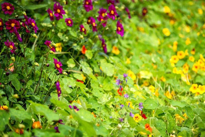 ` S Monet садовничает и дом на Giverny, Нормандии, Франции стоковые изображения rf
