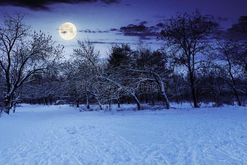's Nachts in de winter stock foto's