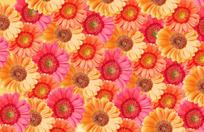 Download Słoneczniki zdjęcie stock. Obraz złożonej z piękno, francja - 13341592