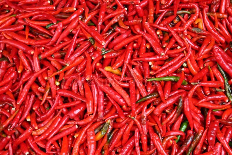 S/poivron rouges chauds photos libres de droits