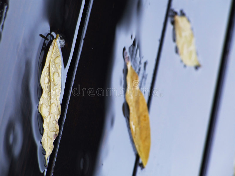 It's raining stock image