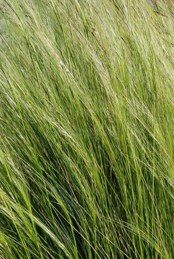 S?rie de texture - herbes vertes dans le vent photos libres de droits