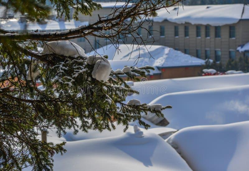S?rja tr?dskogen i vinter fotografering för bildbyråer