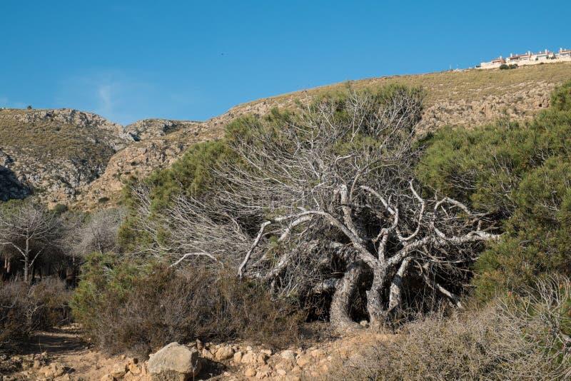 s?rja windswept trees royaltyfri bild