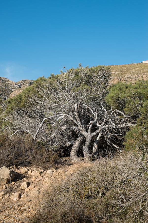 s?rja windswept trees arkivbilder