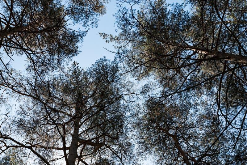 S?rjer i skogen som ses fr?n jordning upp royaltyfri bild