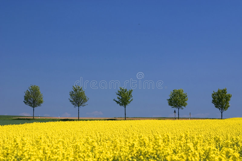 Download It's spring stock image. Image of plants, flora, yellow - 119351