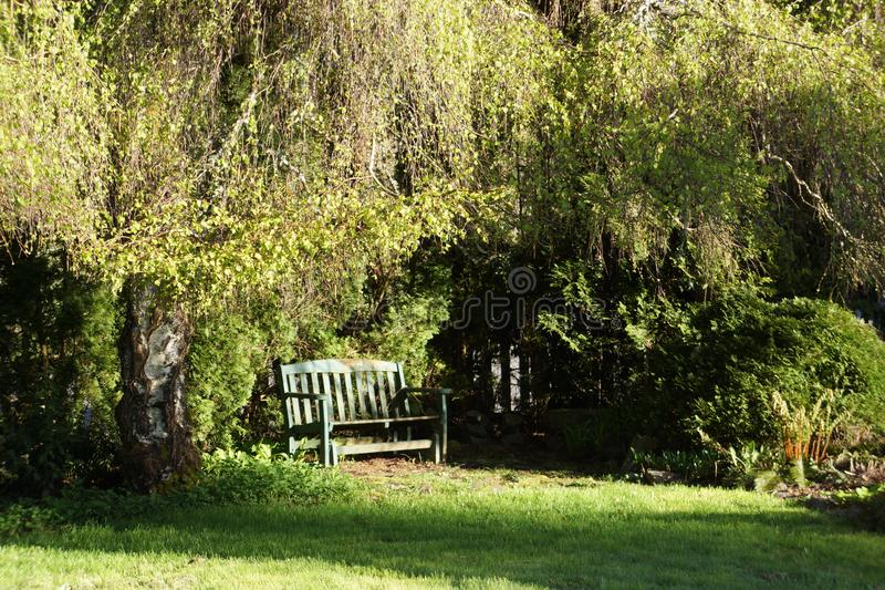 Green bench in sunlight beneath a weeping alder tree stock image