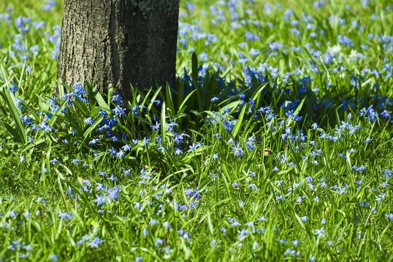 Download It's springtime stock image. Image of natural, fresh, season - 208801