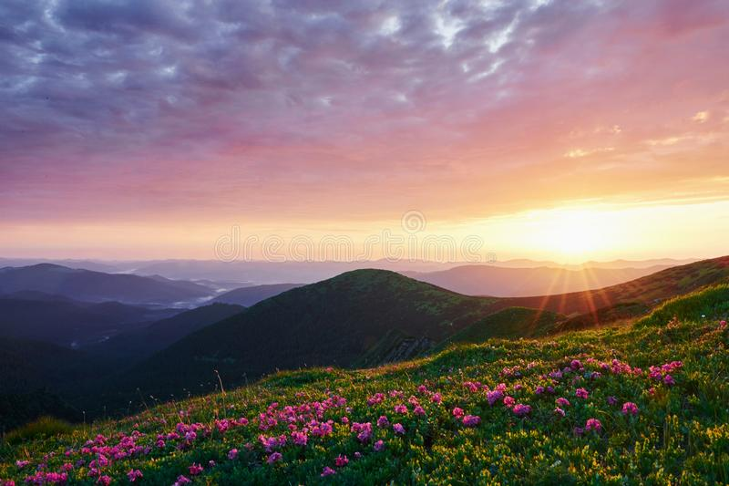 It`s almost sunset. Majestic Carpathian mountains. Beautiful landscape. Breathtaking view.  stock photo