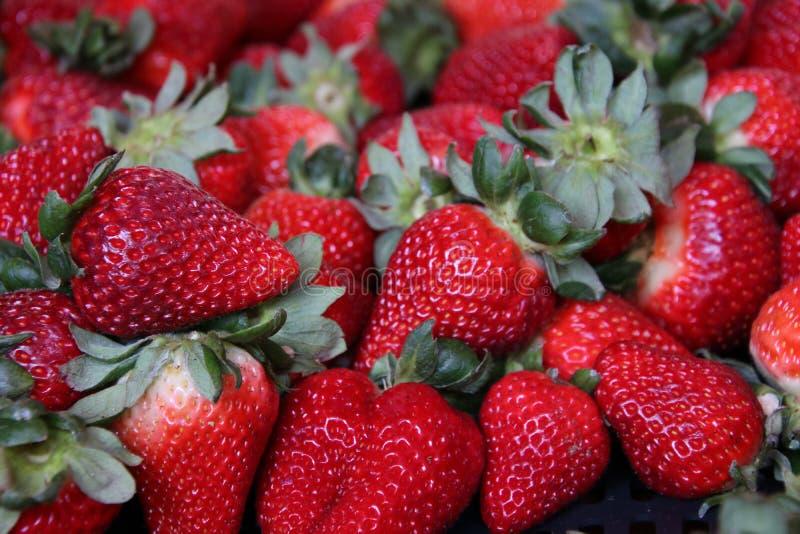 s?ta r?da jordgubbar fotografering för bildbyråer