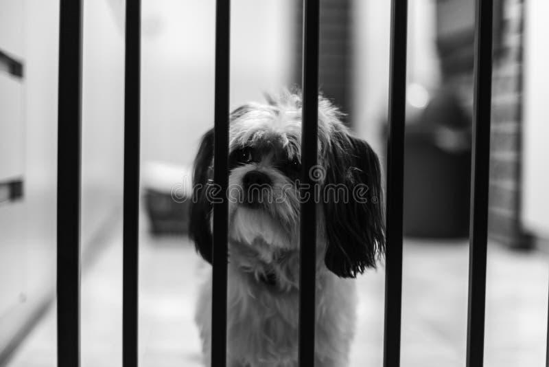 ` s un vita dei cani fotografia stock