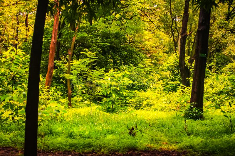 Landscape of Forest stock photos