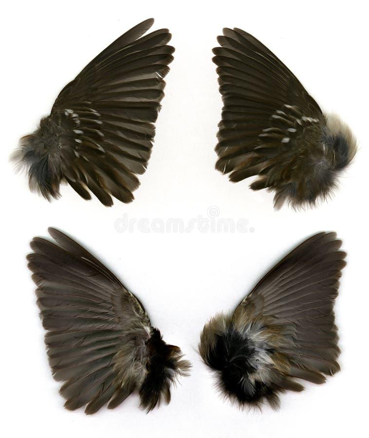 Download S wróbla skrzydła obraz stock. Obraz złożonej z skrzydła - 126131