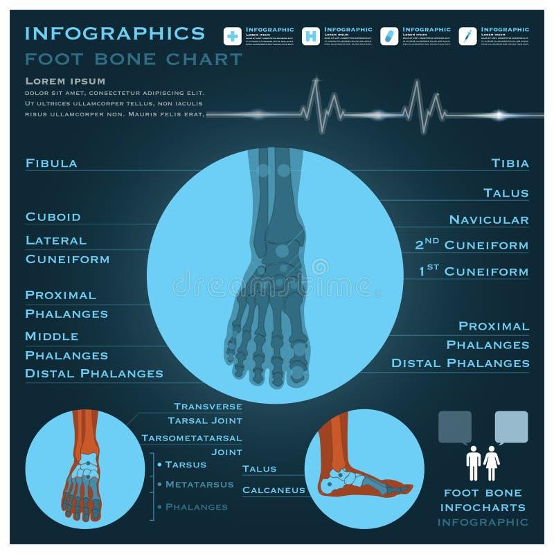 Saúde de Infographic Infocharts do osso de pé e médico ilustração royalty free