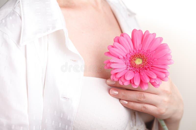A saúde e o corpo fêmeas importam-se o conceito, gerbera cor-de-rosa nas mãos foto de stock