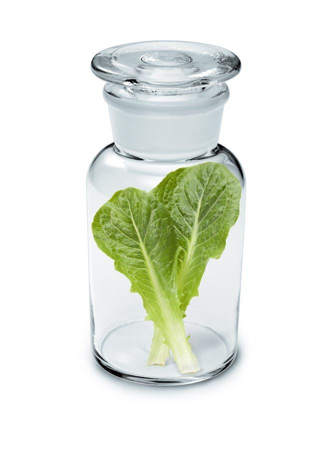 Sałata liścia witaminy butelki dieta obrazy stock