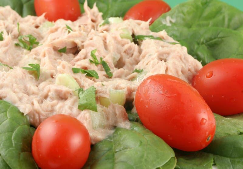sałatkowy tuńczyka zdjęcia royalty free