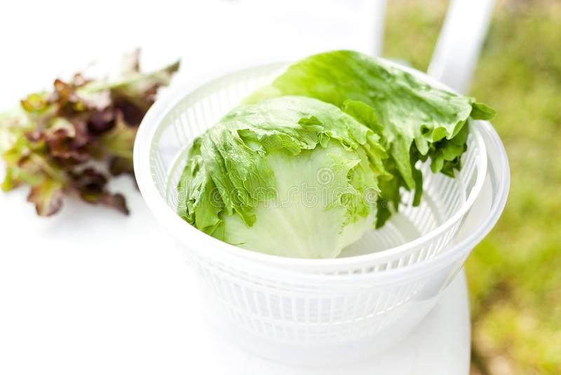 Sałaty sałatka w kądziołku obraz stock