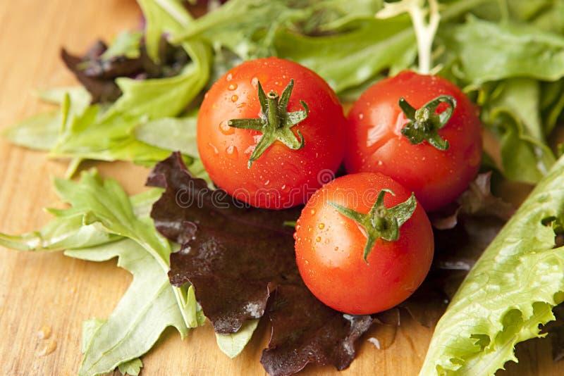 sałaty sałatki pomidor fotografia royalty free