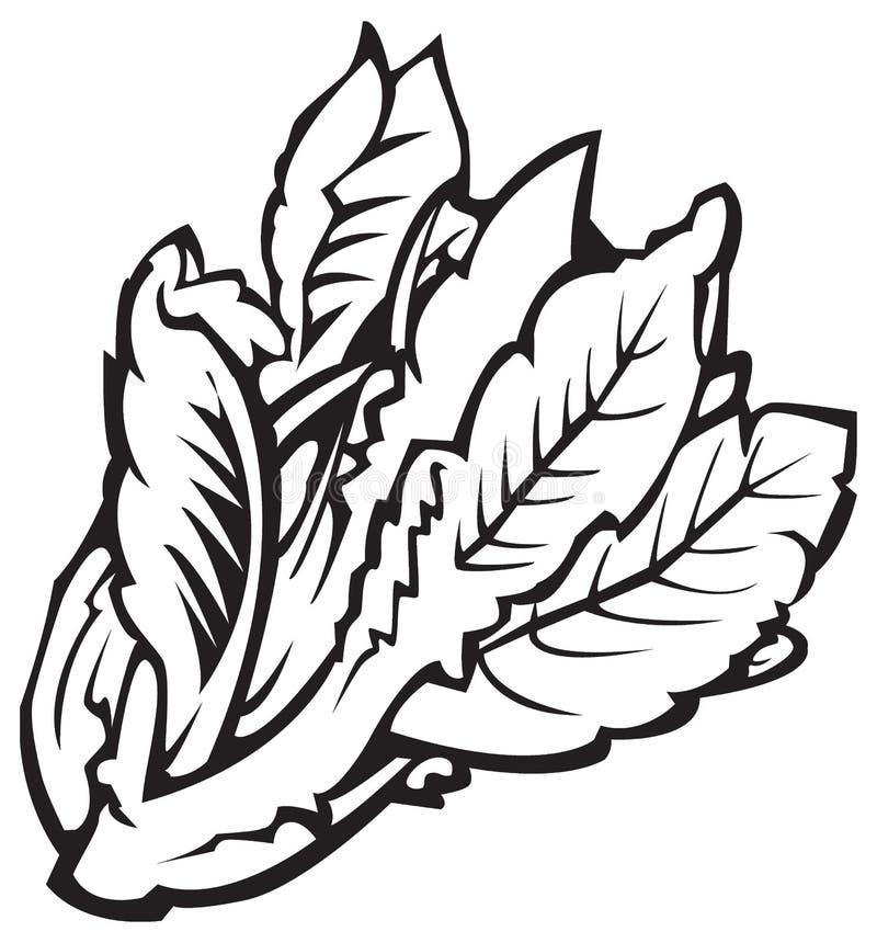 sałaty serii warzywa ilustracja wektor
