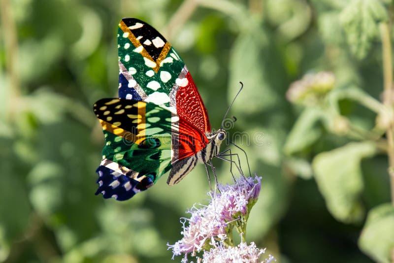 SA cytrus Swallowtail obrazy stock