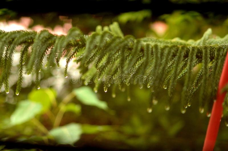 Sa saison des pluies photographie stock