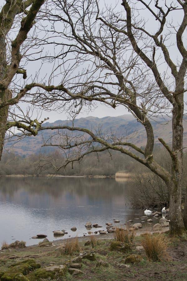 Saaie dag door meer in de winter - naakte bomen, bezinningen, eenden, lage bergen royalty-vrije stock fotografie