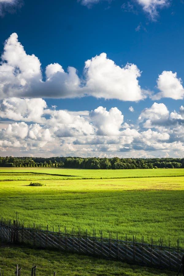 Saaremaa wyspa, Estonia zdjęcia royalty free
