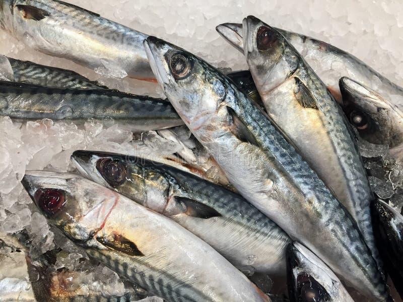 Saba Mackerel in een verse markt van de voedselopslag royalty-vrije stock afbeelding