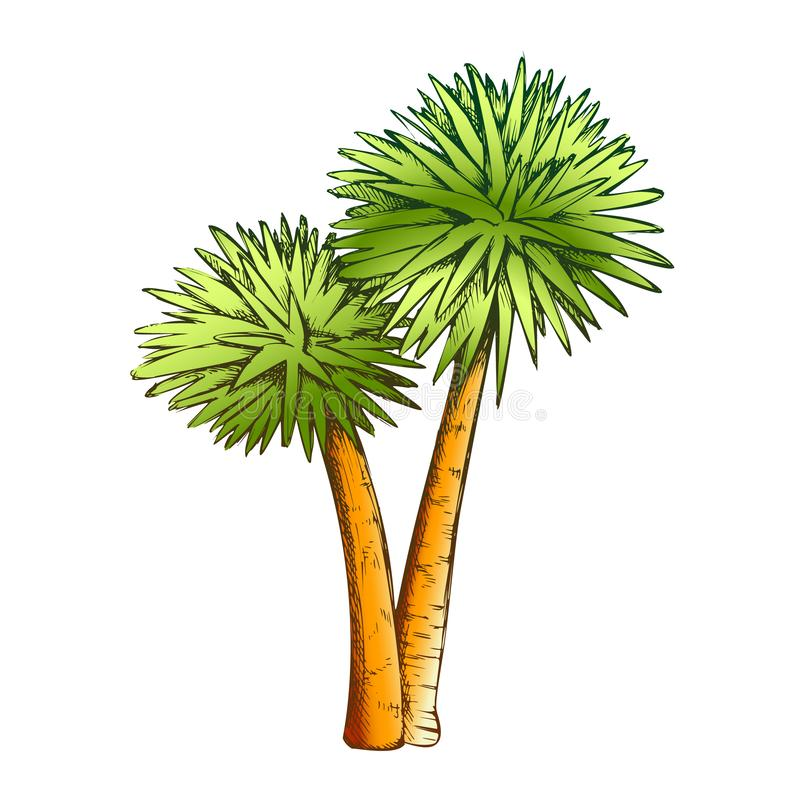 Sabal Palm Exotic Tropical Trees Color Vector. Seashore Large Palm Cocos Nucifera. Warm Climate Wild Nature Botany Coco Plant Layout Designed In Retro Style stock illustration