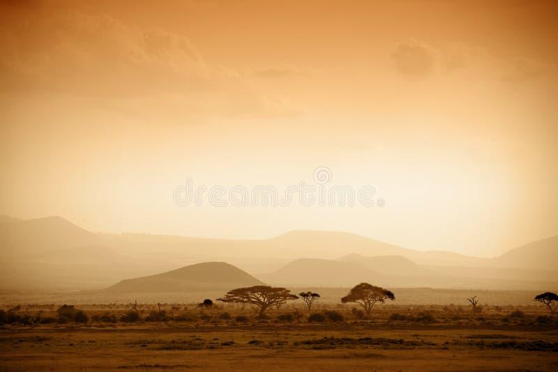 Sabana africana en la salida del sol foto de archivo libre de regalías