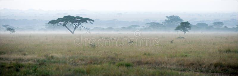Sabana en una niebla de la mañana. foto de archivo