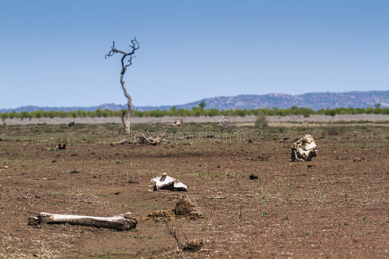 Sabana seca, en el parque nacional de Kruger, Suráfrica fotos de archivo libres de regalías
