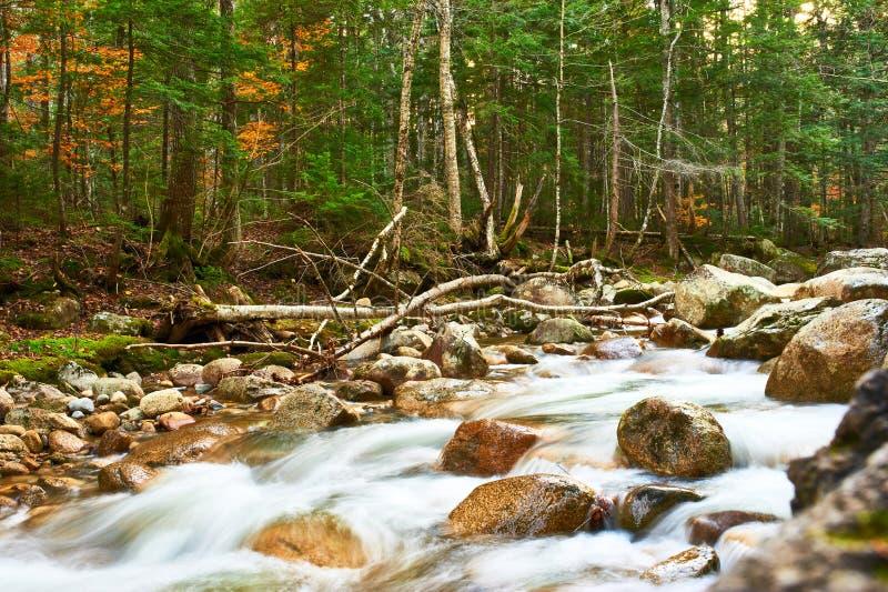 Sabbaday понижается в белый национальный лес горы стоковые фотографии rf