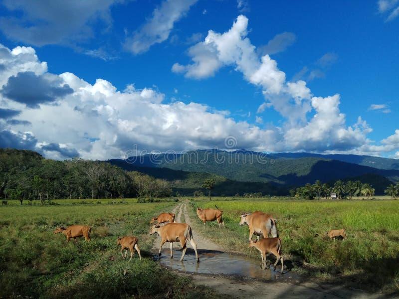 Sabbang Paru royalty-vrije stock foto's