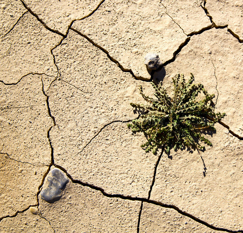 Sabbia asciutta di Brown nell'erosione e nel sommario del Marocco Africa del deserto del Sahara immagini stock