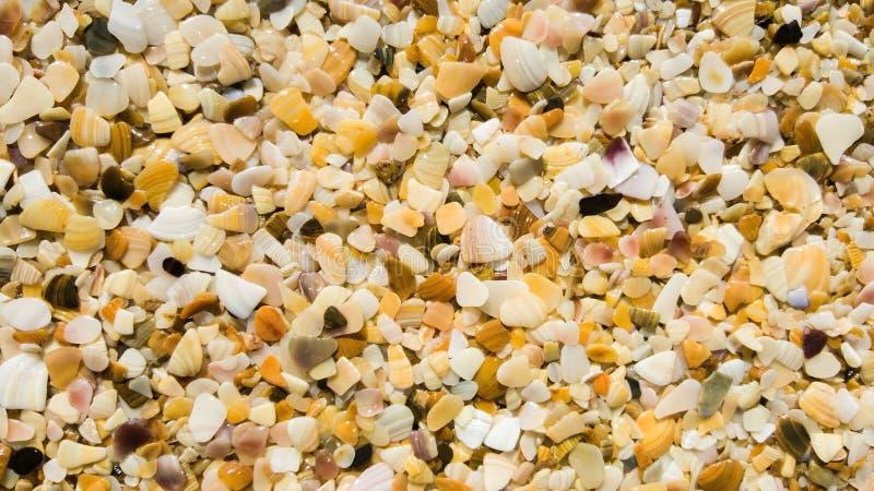 Sabbia dai pezzi di conchiglie sul primo piano della spiaggia del mare fotografia stock