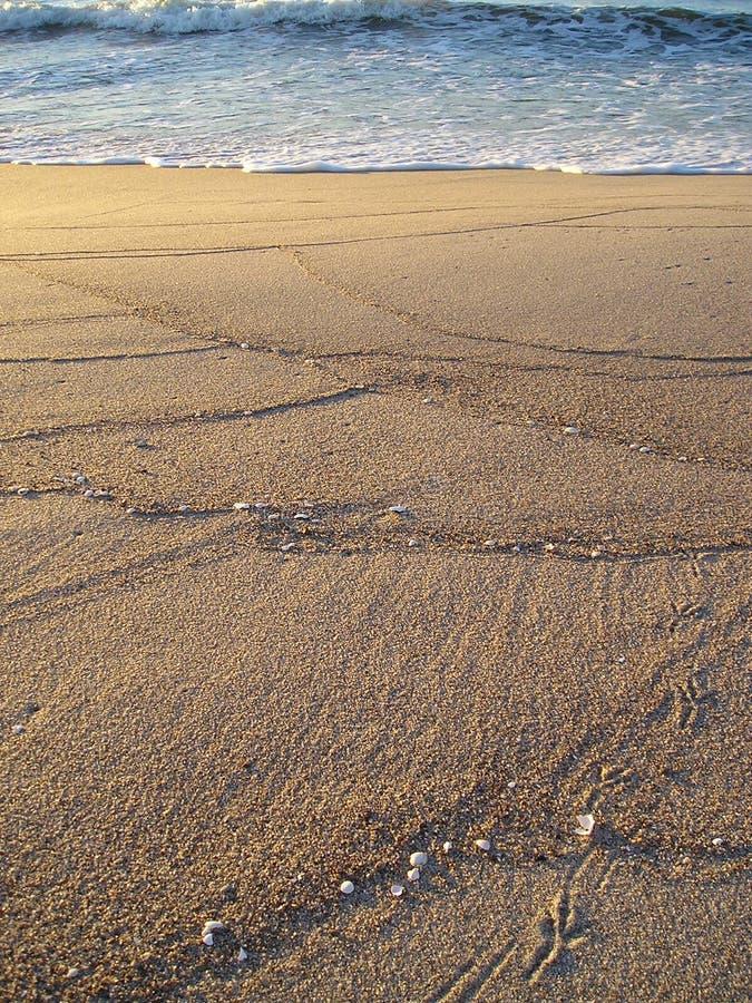 Sabbia dorata fotografie stock