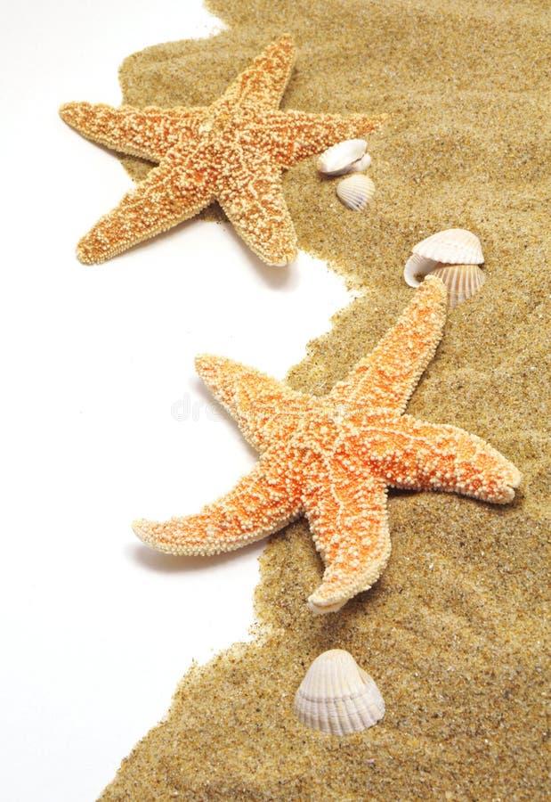 Sabbia e bordo seastar fotografia stock libera da diritti