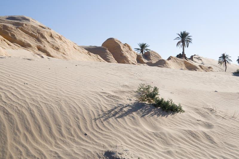 Sabbia e dune petrified immagine stock libera da diritti