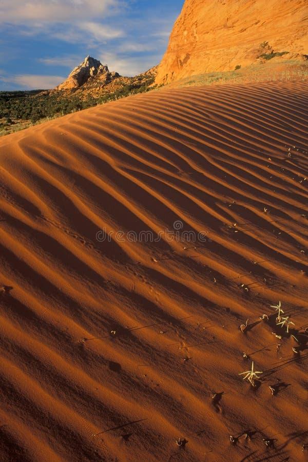 Sabbie rosse del deserto immagine stock libera da diritti