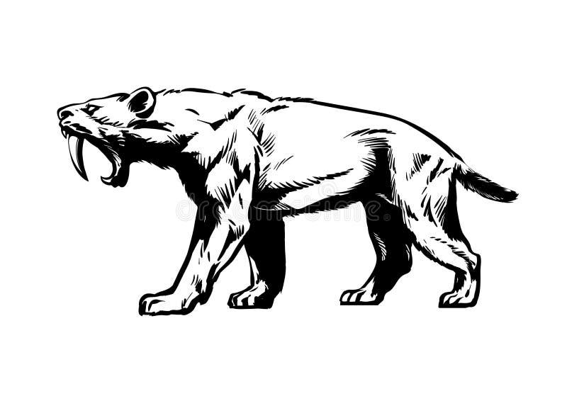 Saber οδοντωτή τίγρη Smilodon Saber-οδοντωτή γάτα Συρμένη χέρι σκίτσων ύφους απεικόνιση που απομονώνεται διανυσματική στο λευκό ελεύθερη απεικόνιση δικαιώματος