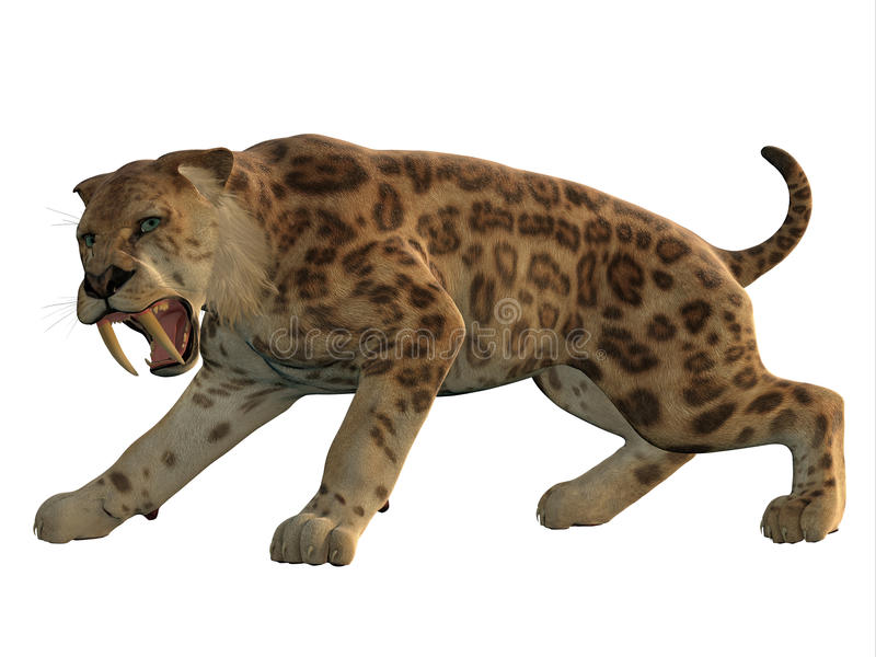 Saber-Tooth Cat Angry. Saber-Tooth Tiger was an extinct large carnivore that lived worldwide during the Eocene to Pleistocene Eras royalty free stock photos